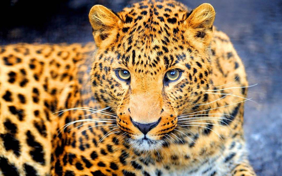2018 El despertar de la mujer jaguar