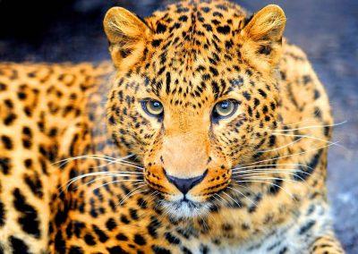El despertar de la mujer jaguar